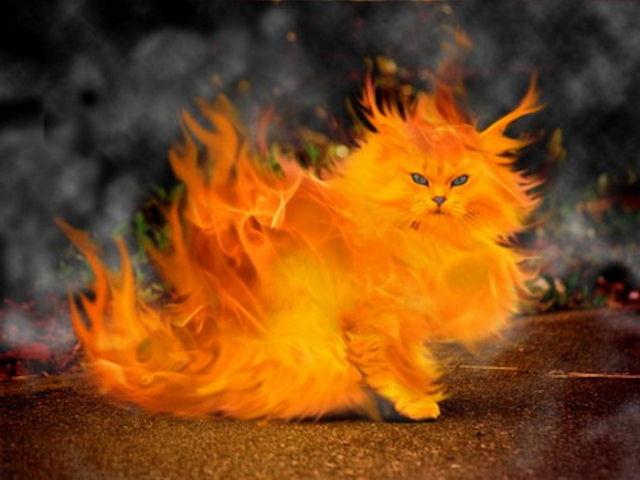 Пожарные спасли кота, который чуть не задохнулся во время пожара