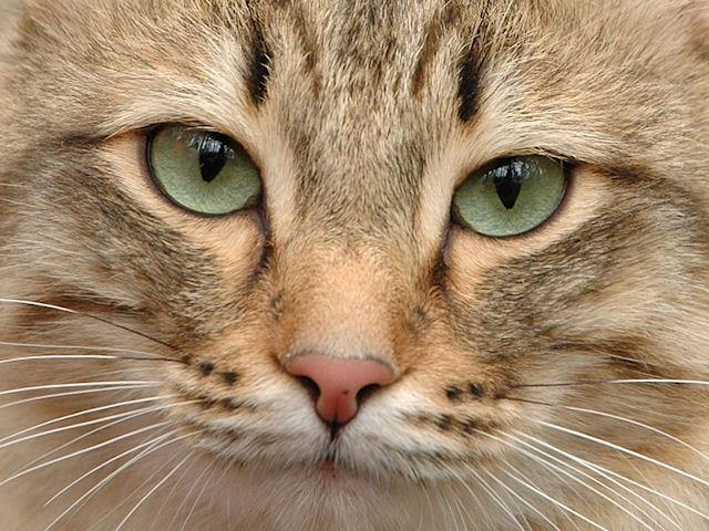 Госдума примет закон о правилах содержания домашних животных