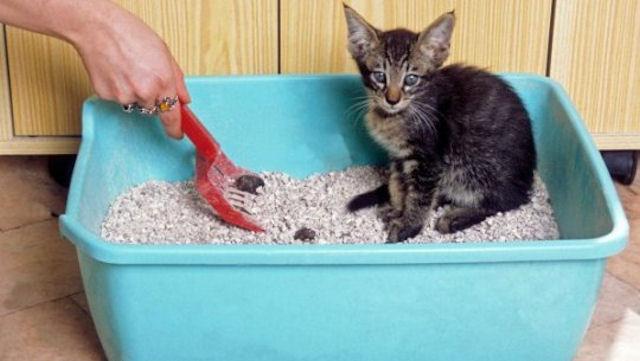 Приучаем котенка к туалету!