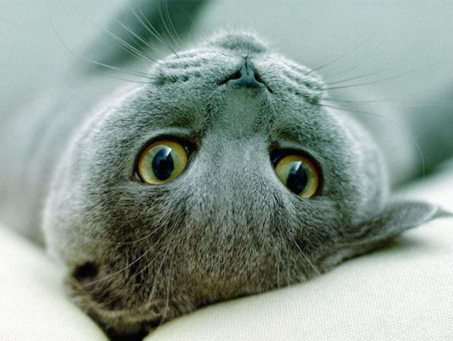 Привычки хозяев «цепляются» к кошкам