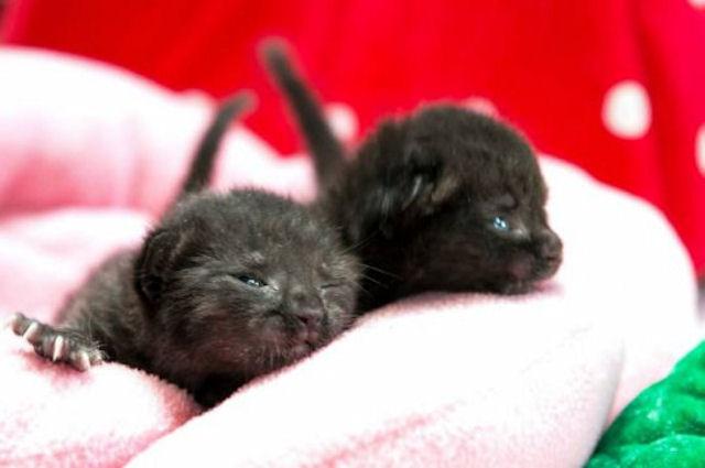Путешествие новорожденных котят по Америке