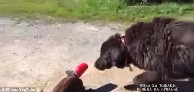 Пёс спас попавшего в беду кота
