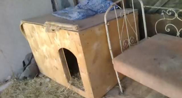 Пёс стал заботливым отцом для новорожденных котят