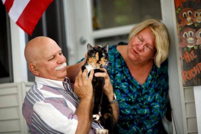 Ради возвращения домой кошка прошла более 320 километров