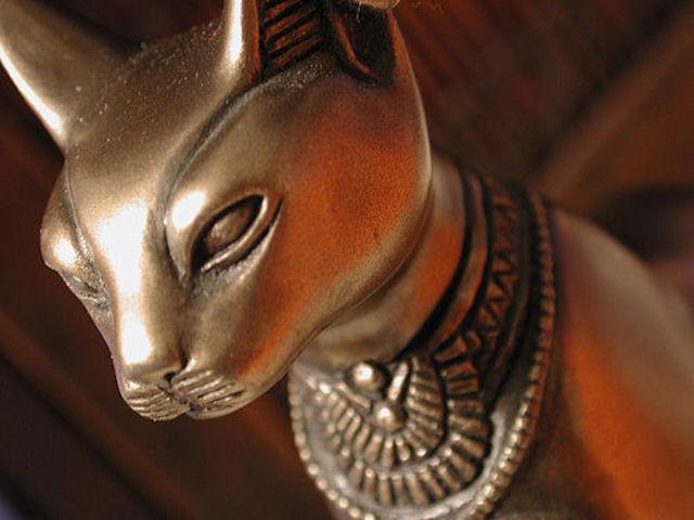 Раскрыта тайна почитания кошек древними египтянами