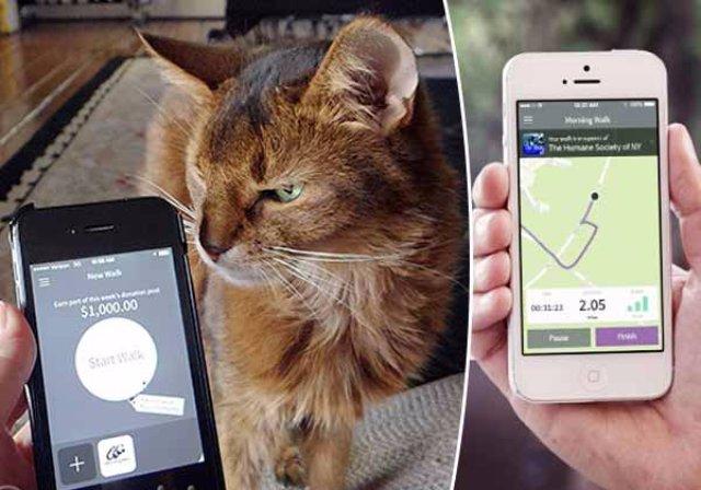 ResQwalk — приложение, призванное помочь кошкам в приютах