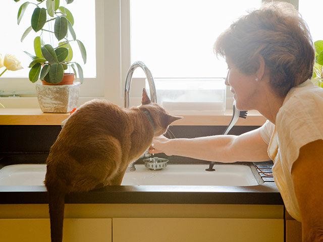 Кошачьи паразиты повышают риск суицида у женщин