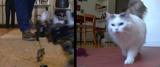 Робот-кошка – рекордсмен скорости