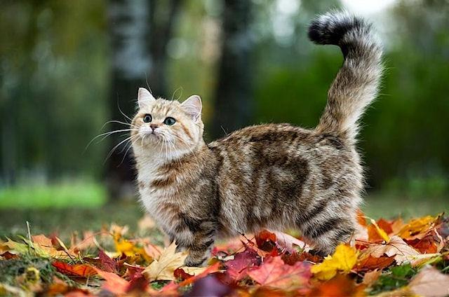 Роль кошки в жизни человека