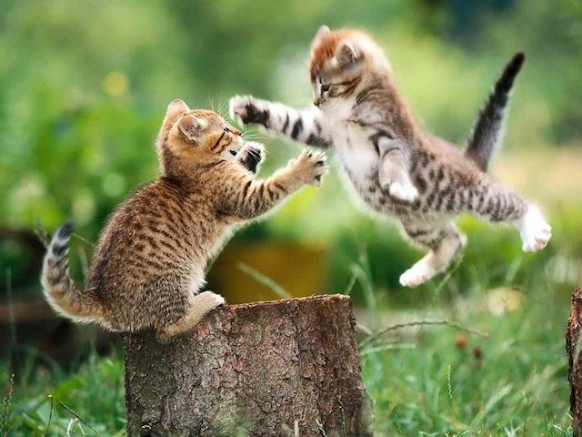Выставка кошек «Русская красавица» с успехом прошла в Нижнем Новгороде