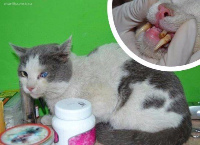 Саблезубый кот Марио нашёл семью