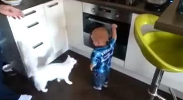 Самая лучшая и надёжная нянька — это кот