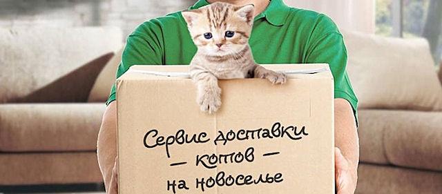 Сбербанк организовал «кошачий» сервис