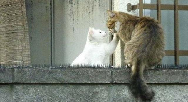 Сибирская кошка стала причиной судебного разбирательства
