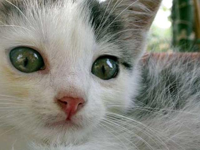Смелый котёнок выжил после экстремальной поездки на колесе джипа