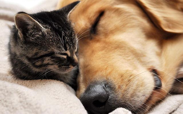 Собака выкормила 3-х умирающих котят