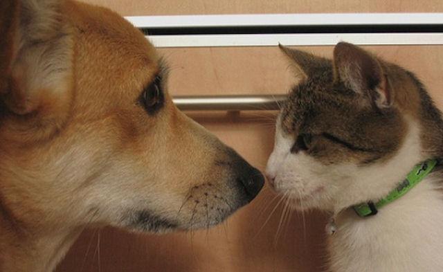 Собаку и кошку объединили кровные узы