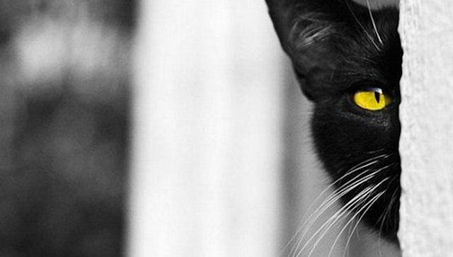 Соседи поссорились из-за кошки и оказались в суде