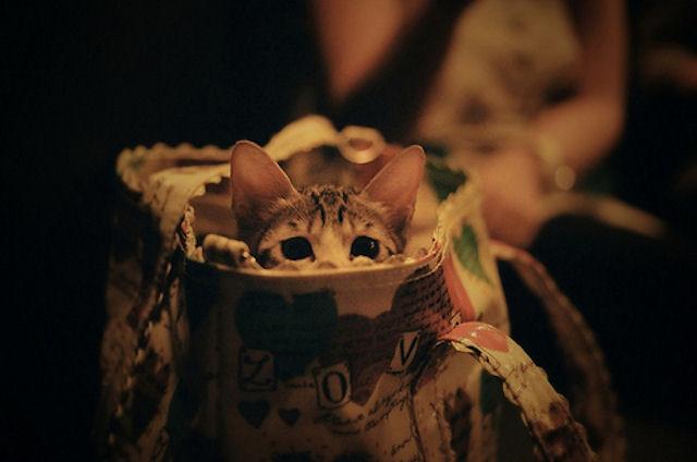 Сотрудники типографии приняли котят за бомбу