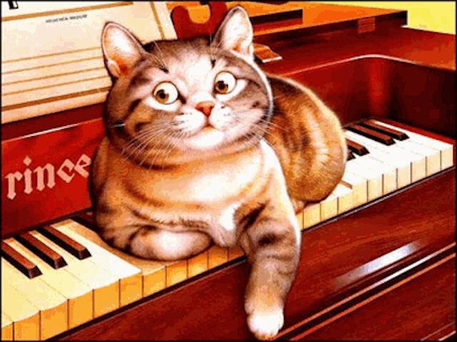 Создана музыка для кошек