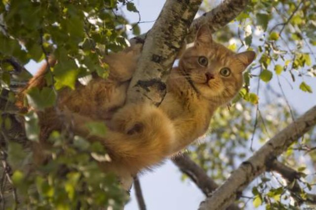 Спасатели помогли коту, который застрял в дупле дерева