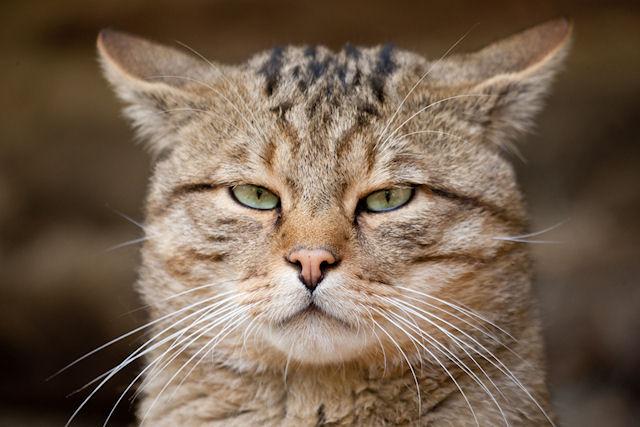 За спасение кошки со взломом - штраф 16 тыс рублей