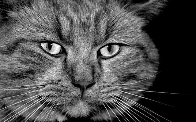 Подросток получил срок за убийство кота