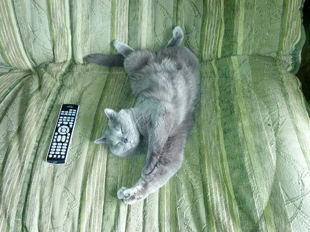 Контакт с человеком – стресс для кошки!