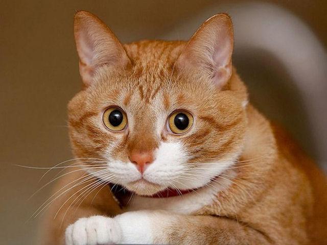 Свидетелем в суде стал кот