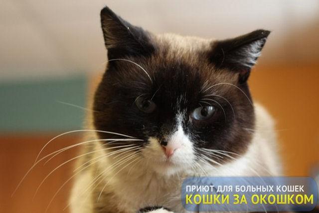 В Сыктывкаре 70 кошек могут остаться без приюта