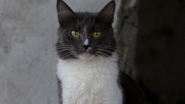 Сыктывкаровцы освободили кошек, заточённых в подвале