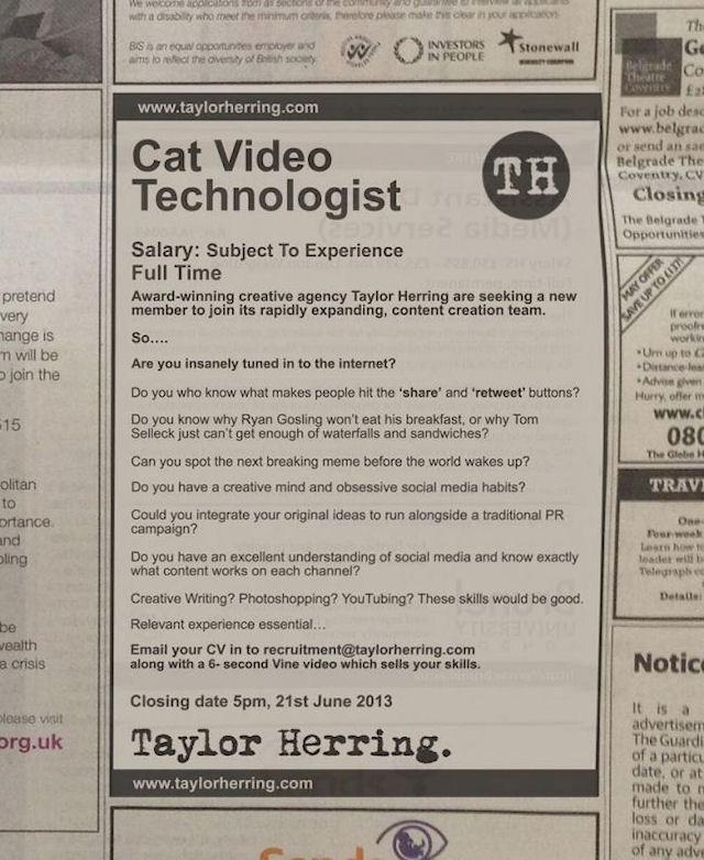 Taylor Herring ищет специалиста для видеосъемок кошек