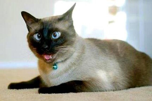 Темнота помогла котятам избавиться от косоглазия