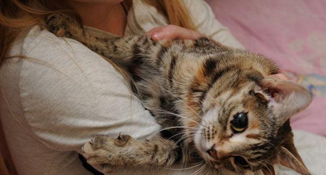 В Воронеже живут трехухая и пятиухая кошки