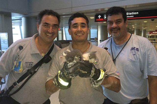 Трое котят застряли в потолке аэропорта Майами