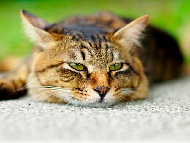 Мужчина убил соседа из-за смерти кошки