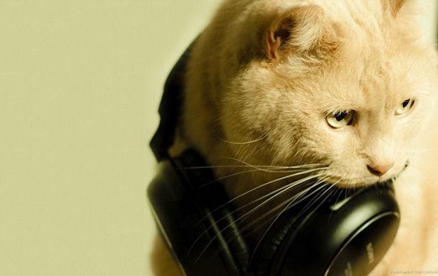 Ученые выяснили как музыка влияет на кошек
