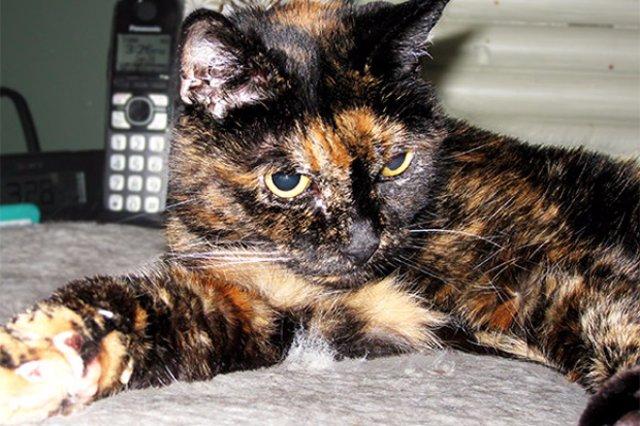 Умерла старейшая кошка в мире