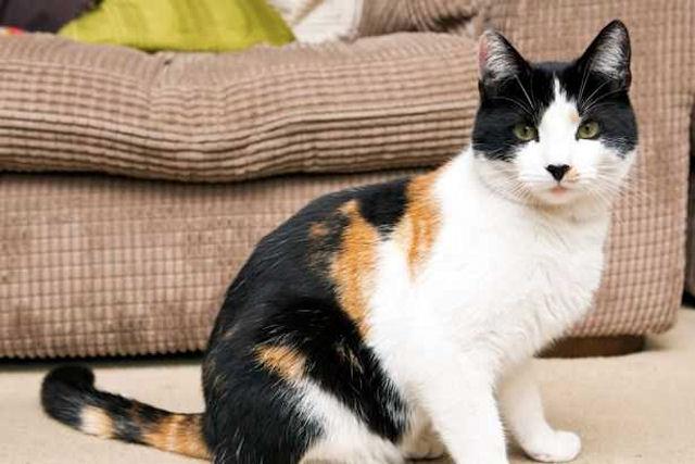 Уникальный окрас морды прославил кота