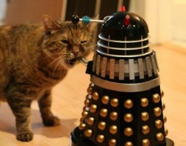 «Усатые» роботы воспринимают мир как кошки