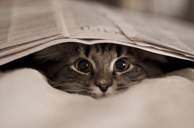 Ужесточаются требования к владельцам кошек и собак