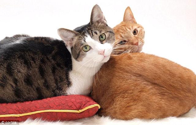 В Америке живут 2 кота-миллионера