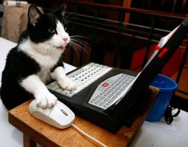 В Америке живёт кот-хакер