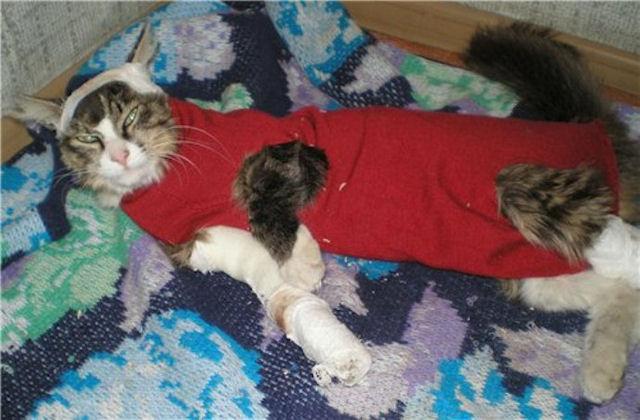 В Амурске спасают кота, пострадавшего от рук живодёра