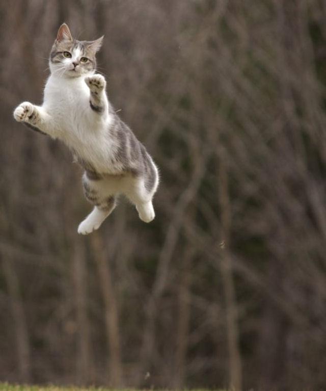 В Англии объявились летающие кошки
