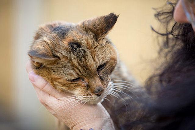 В Англии умерла старейшая кошка мира