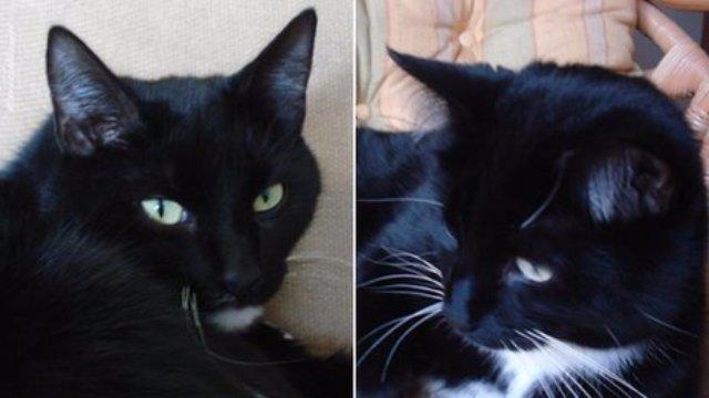 В Англии живут кошки-клептоманы