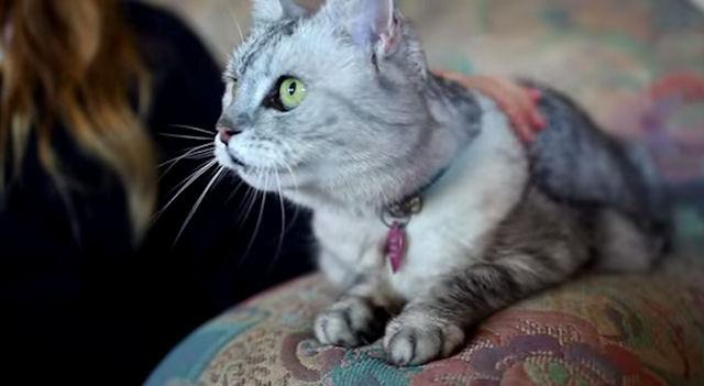 В Англии живёт кошка, которая мурчит как пылесос
