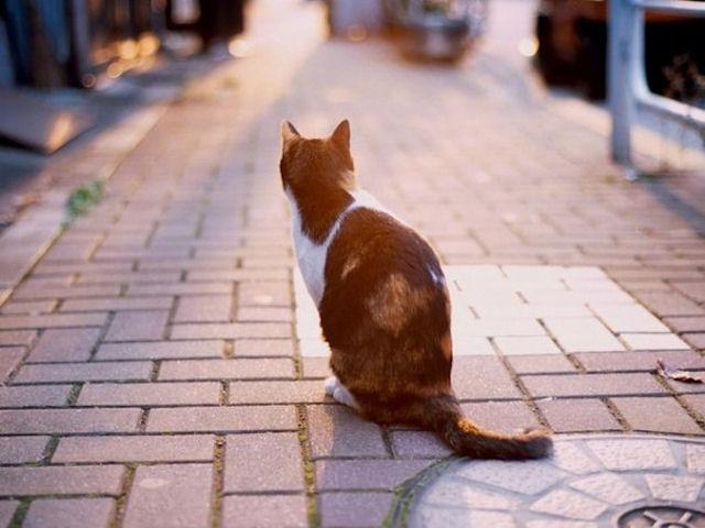 В Австралии кошка не позволила хозяину сгореть