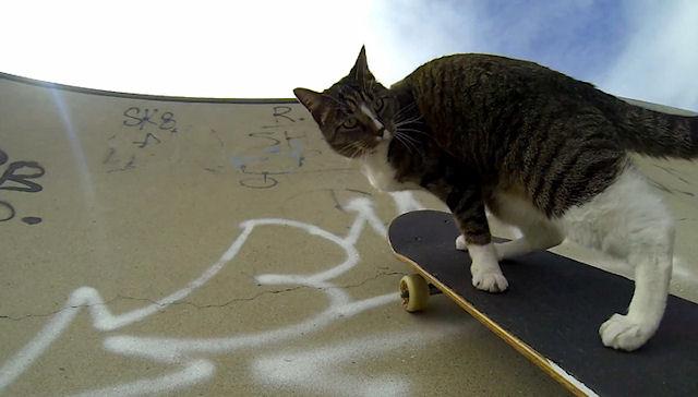 В Австралии живёт кошка, которая выполняет трюки на скейтборде